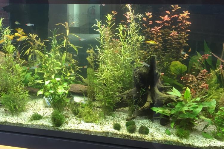 Das Aquarium der Diesterweg-Stiftung