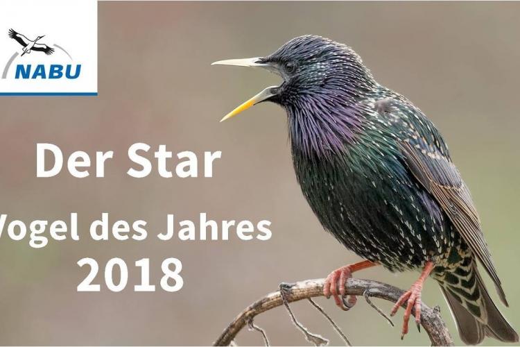 Der Star ist Vogel des Jahres 2018